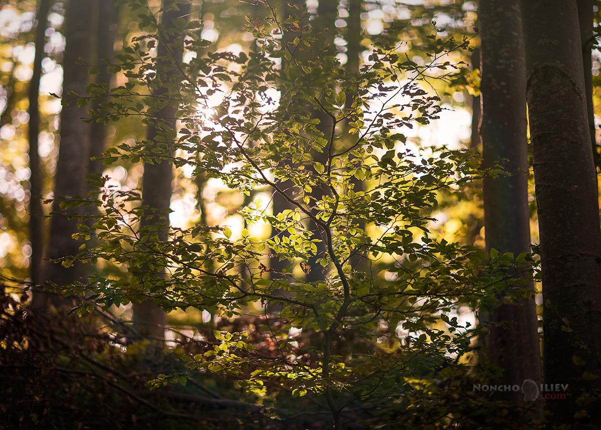 Залез есен гора
