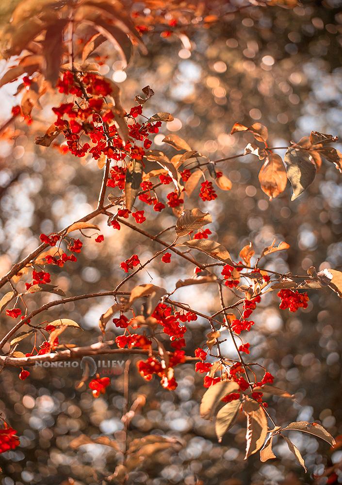 червена есен