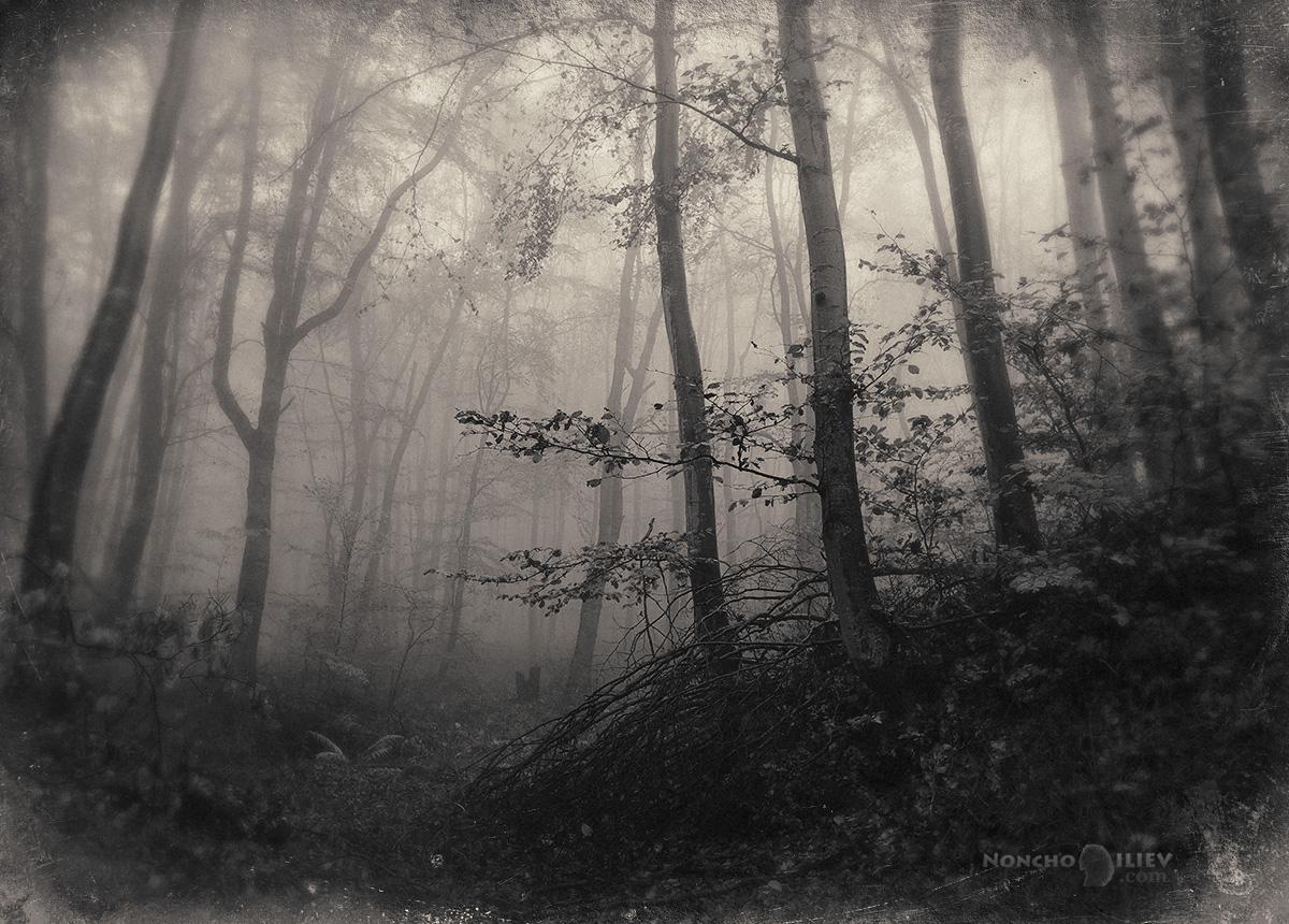 черно бяла мъгла