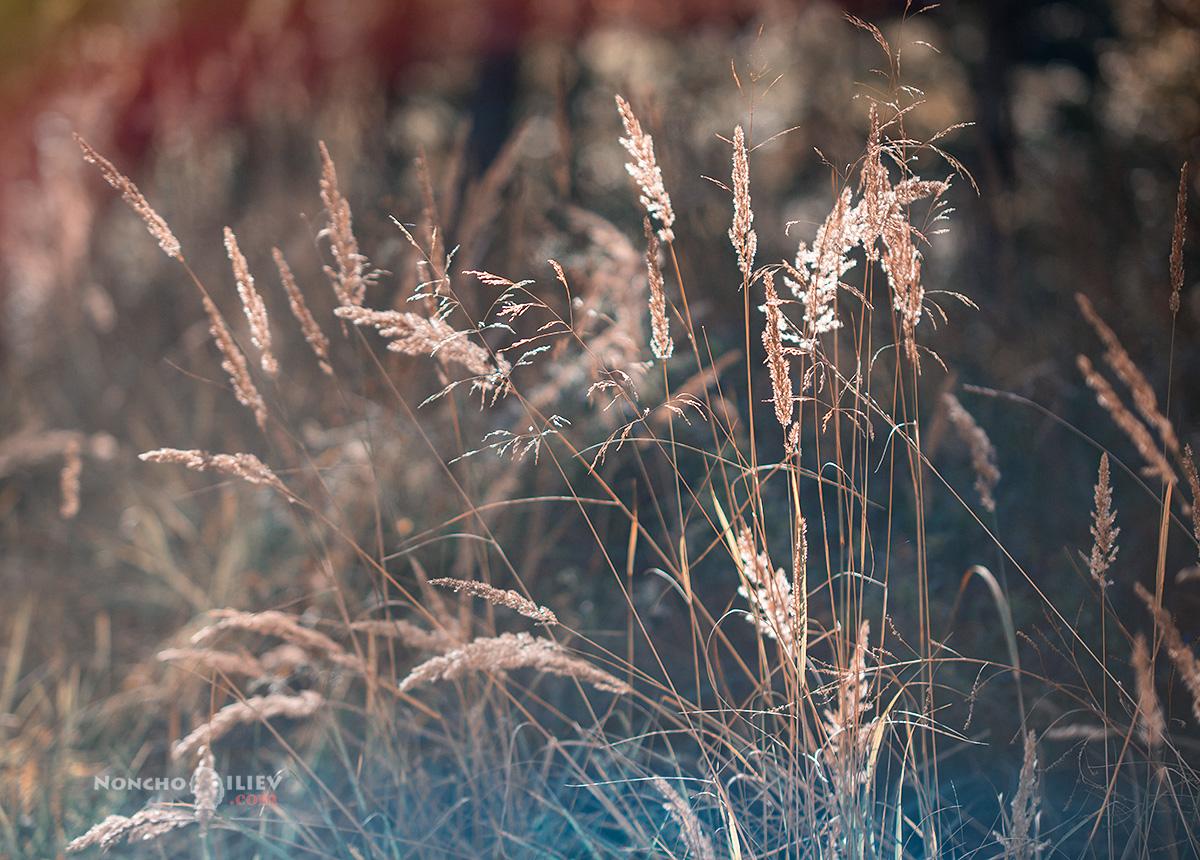 треви