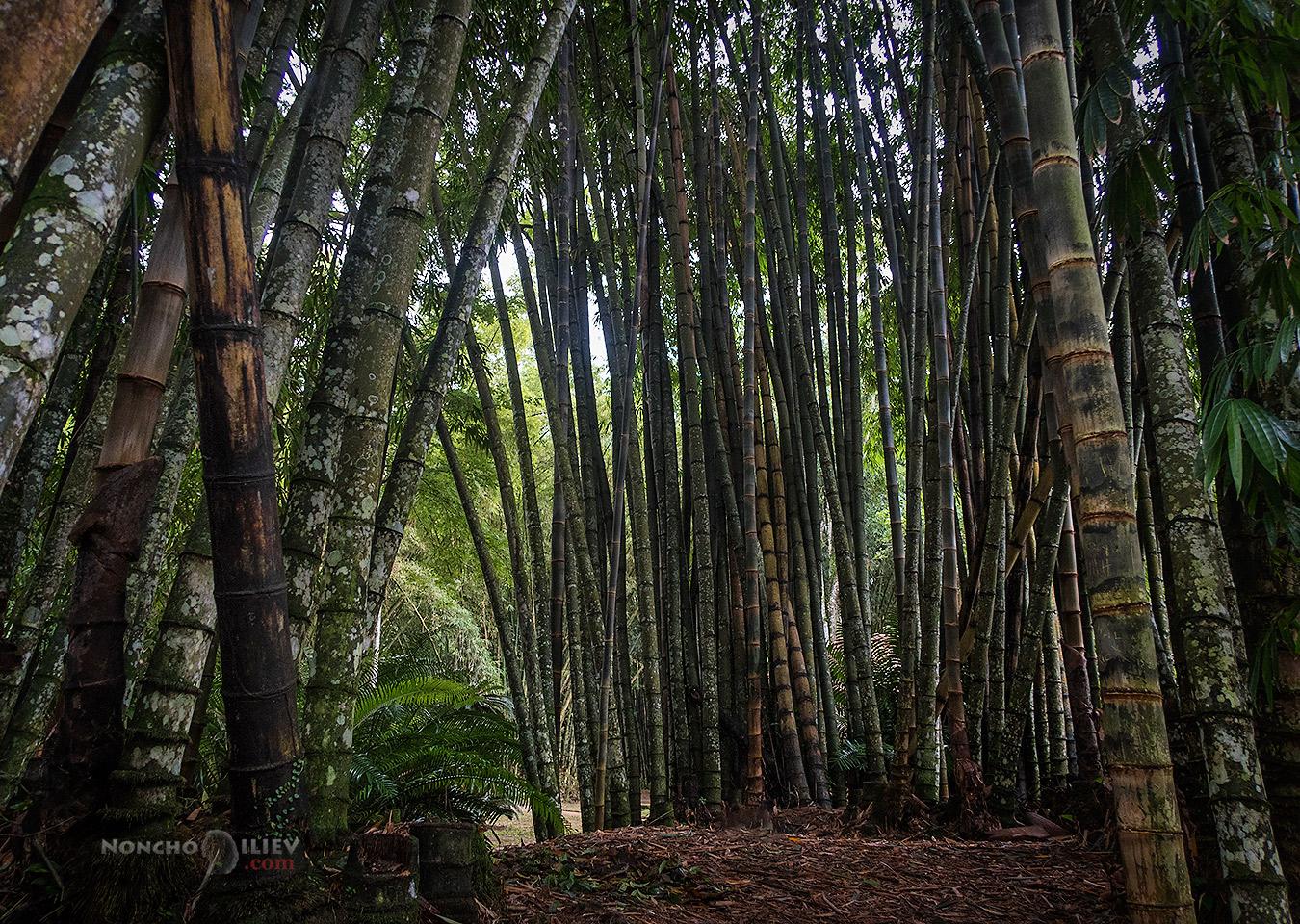 рио де жанейро ботаническа градина