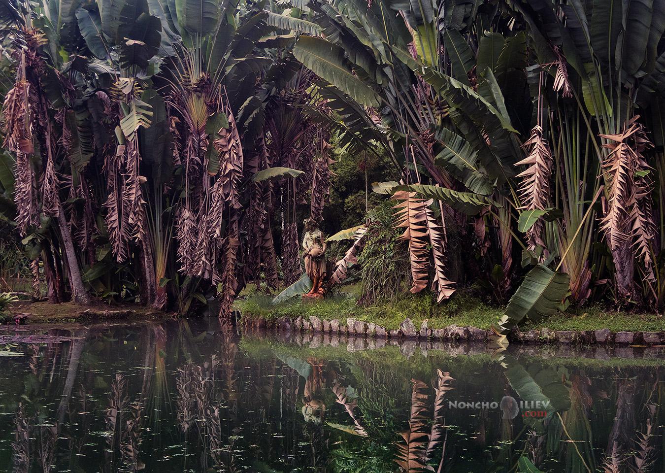 рио ботаническа градина бразилия