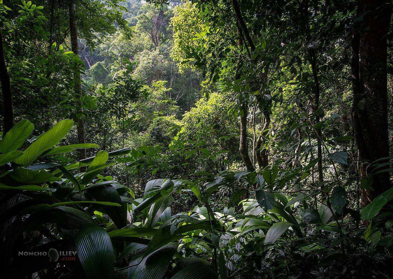 Tijuca Forest jungle Rio