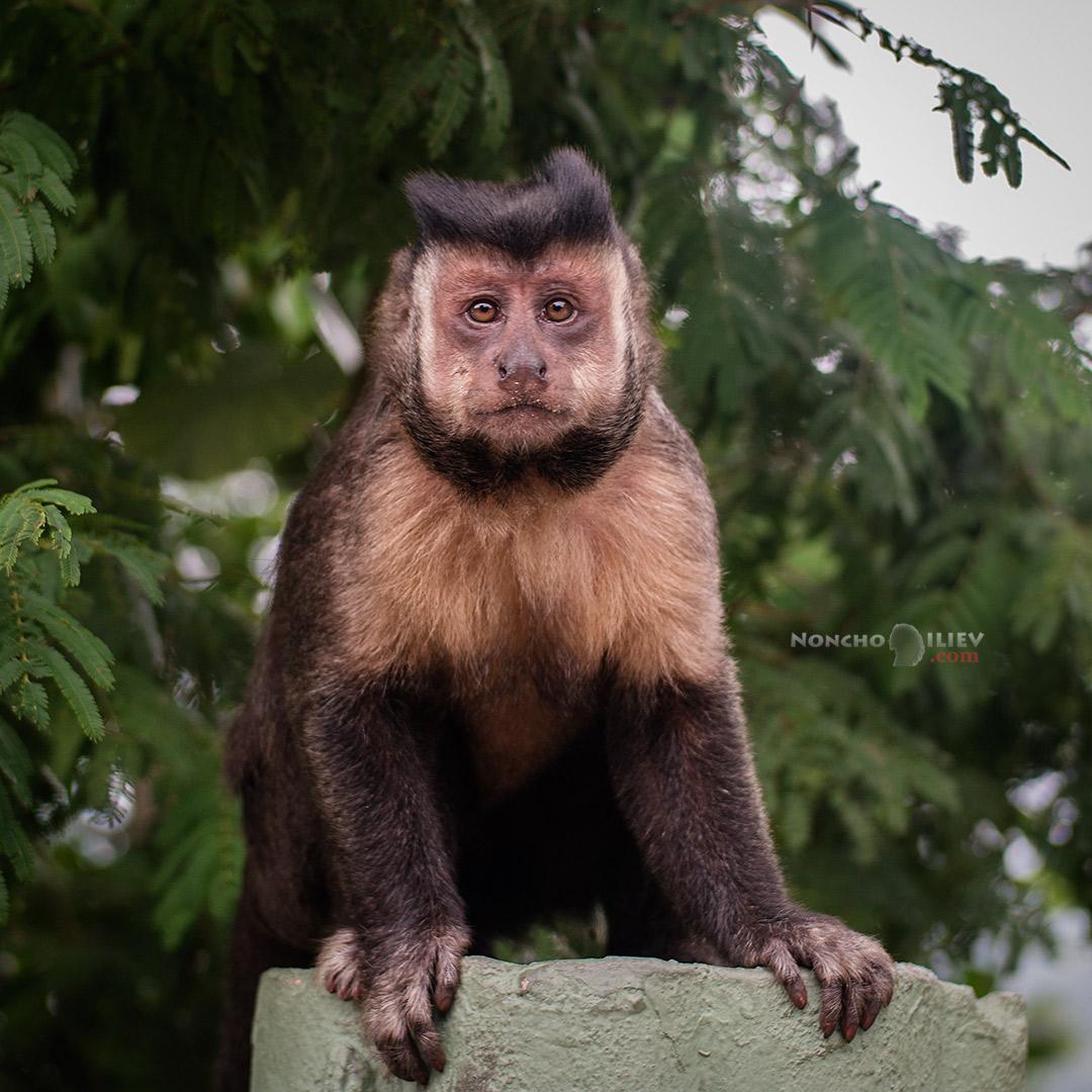 monkey rio brazil