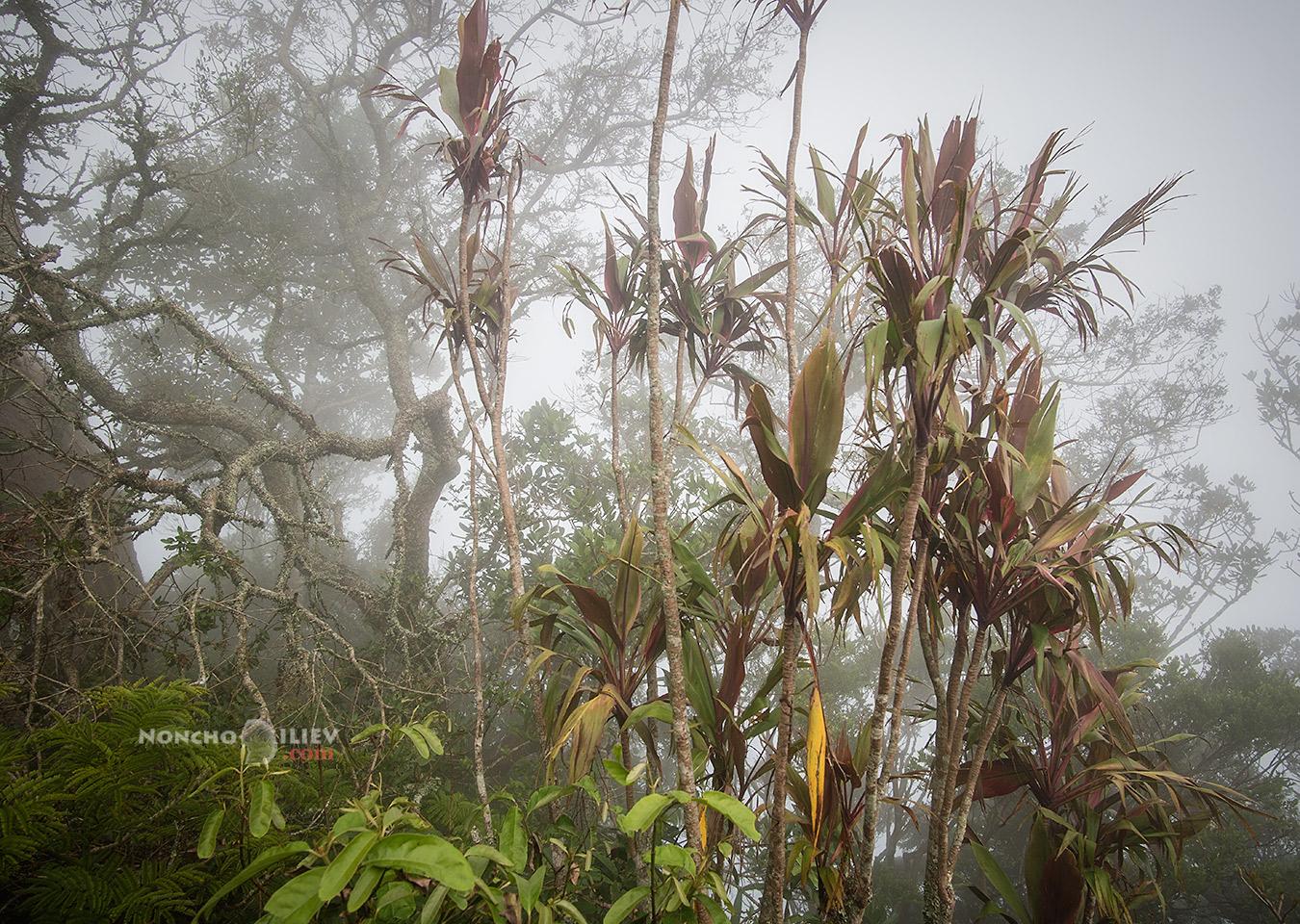 рио в мъгла