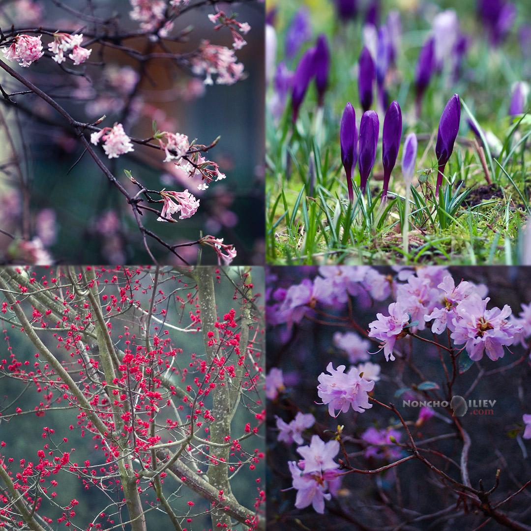 Баден-Баден пролет
