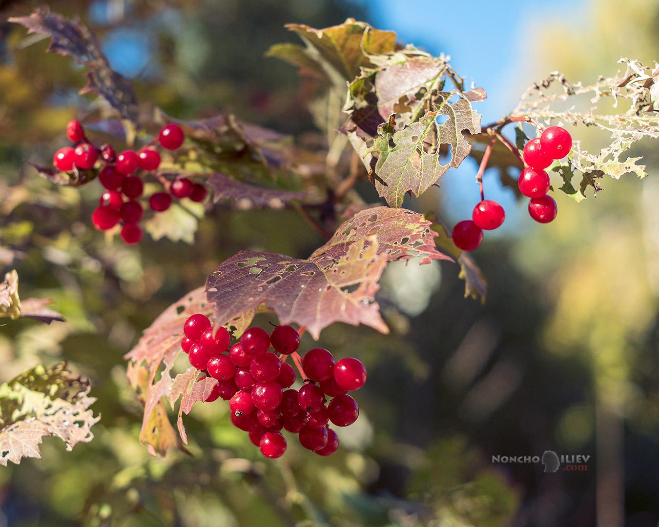 есен цветове