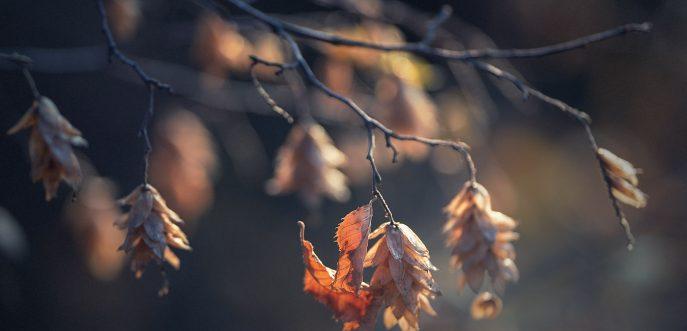 есенни елементи